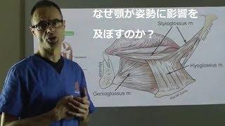 なぜ顎が姿勢に影響を及ぼすのか?