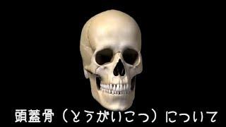 頭蓋骨(とうがいこつ)について