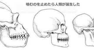 後退したアゴによる呼吸障害は、人類進化の負の遺産